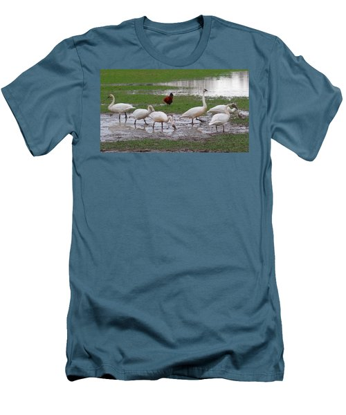Trumpeter Swans And Rooster Men's T-Shirt (Athletic Fit)