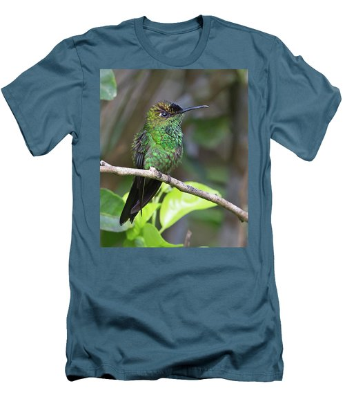Violet-fronted Brilliant Men's T-Shirt (Athletic Fit)