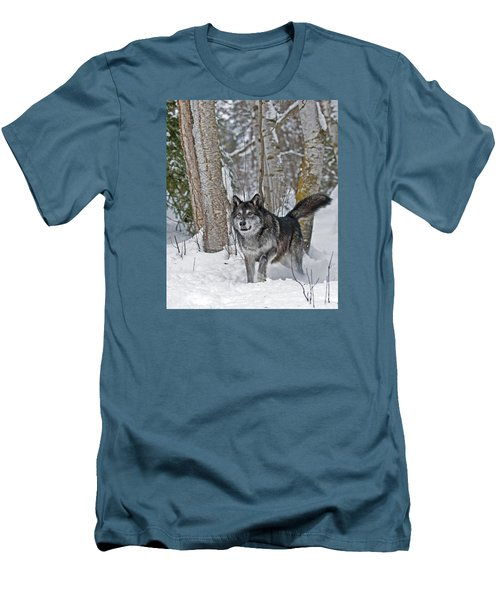 Wolf In Trees Men's T-Shirt (Athletic Fit)