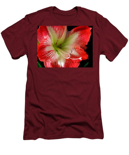 Amaryllis Men's T-Shirt (Slim Fit) by Ron Davidson
