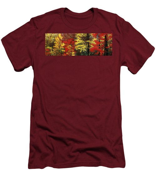 Fall Canopy Men's T-Shirt (Athletic Fit)
