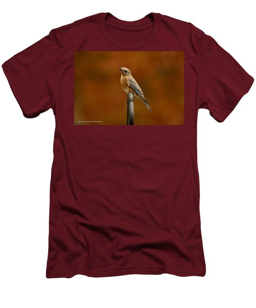 Men's T-Shirt (Slim Fit) featuring the photograph Female Bluebird by Robert L Jackson