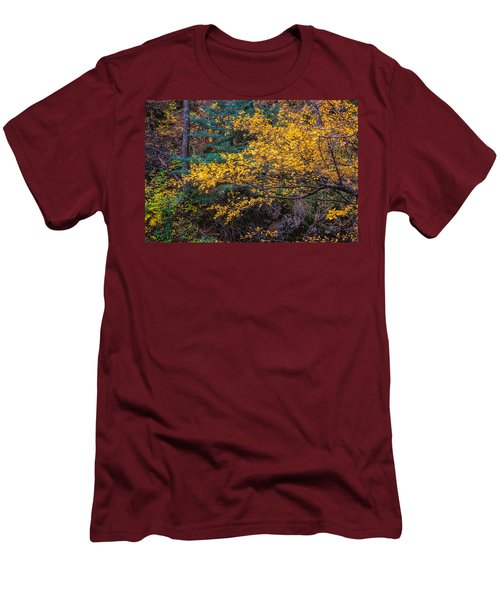 Colorful Trees Along The Creek Bank Men's T-Shirt (Slim Fit) by John Brink