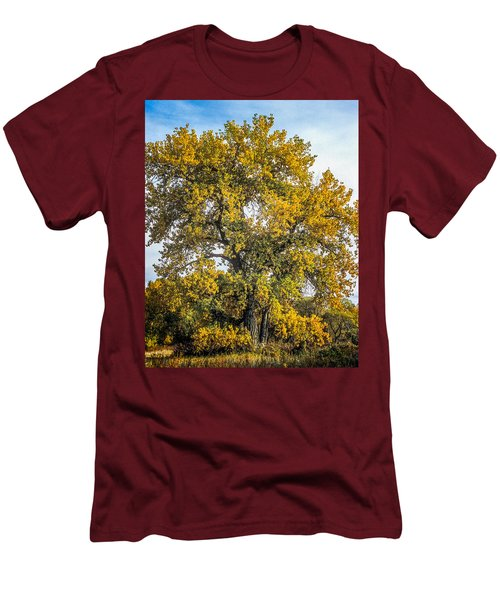Cottonwood Tree # 12 In Fall Colors In Colorado Men's T-Shirt (Slim Fit) by John Brink