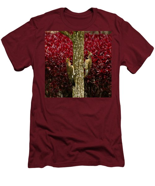 Dueling Woodpeckers Men's T-Shirt (Athletic Fit)