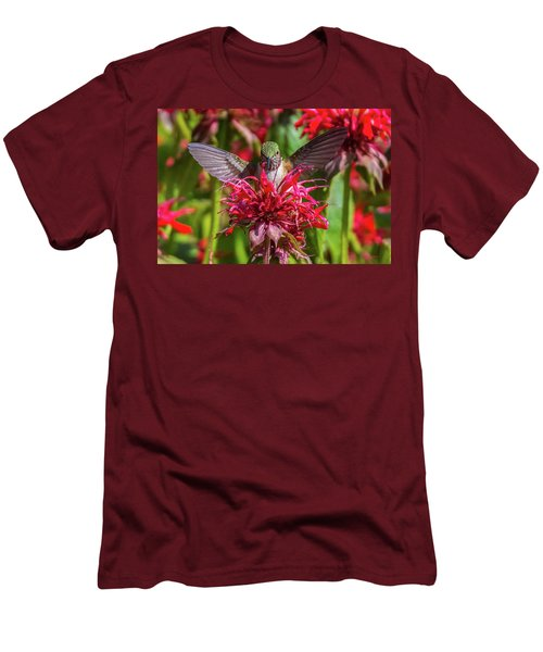 Hummingbird At Eagles Nest Men's T-Shirt (Athletic Fit)