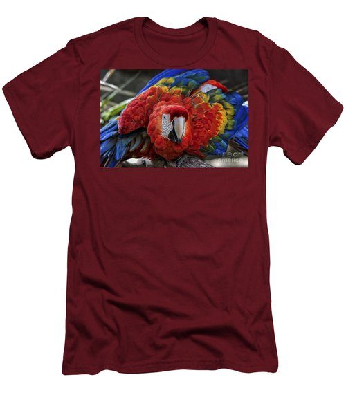 Macaw Parrot Men's T-Shirt (Athletic Fit)
