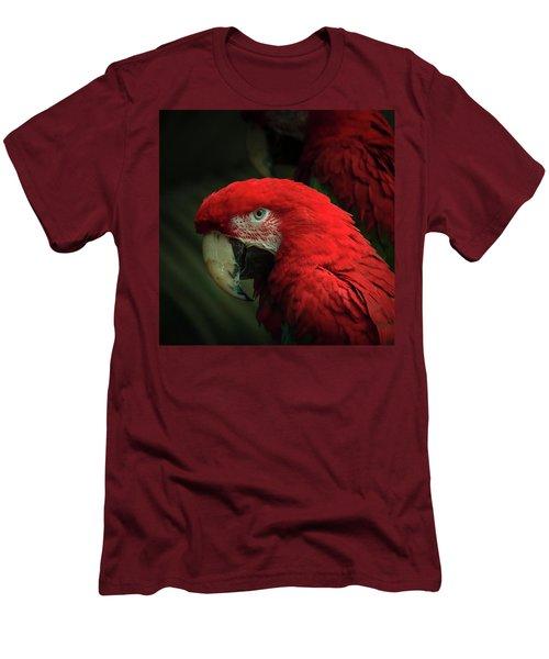 Macaw Portrait Men's T-Shirt (Slim Fit)