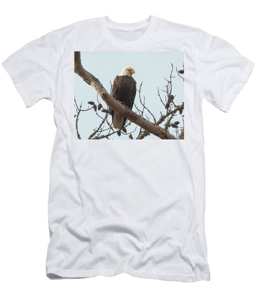 Resting Bald Eagle Men's T-Shirt (Athletic Fit)