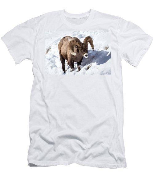 Bighorn Sheep Men's T-Shirt (Slim Fit)