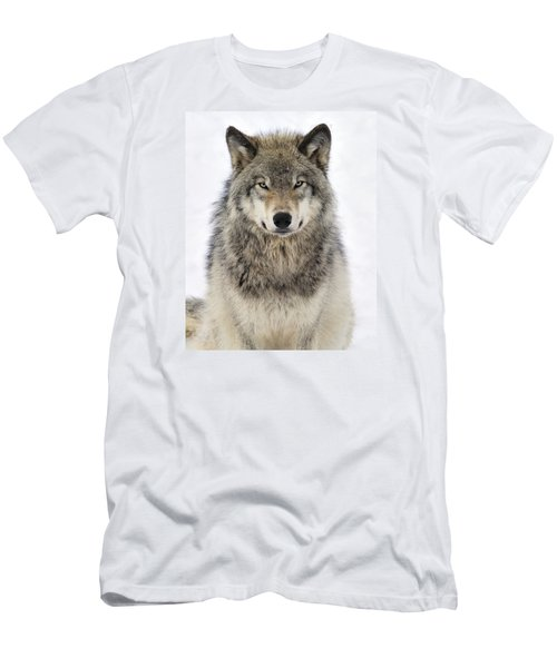 Timber Wolf Portrait Men's T-Shirt (Slim Fit) by Tony Beck