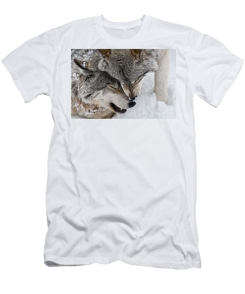 Timber Wolf Pictures Men's T-Shirt (Athletic Fit)