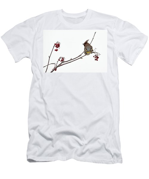 Bohemian Waxwings Eating Rowan Berries Men's T-Shirt (Slim Fit) by Jouko Lehto