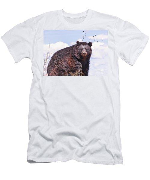American Black Bear Men's T-Shirt (Athletic Fit)