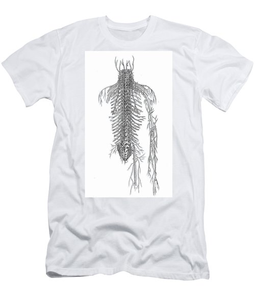 Anatomy: Spinal Nerves Men's T-Shirt (Athletic Fit)