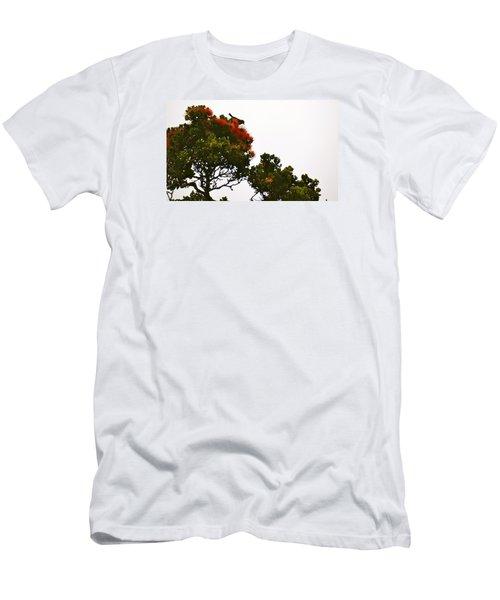 Apapane Atop An Orange Ohia Lehua Tree  Men's T-Shirt (Slim Fit) by Lehua Pekelo-Stearns