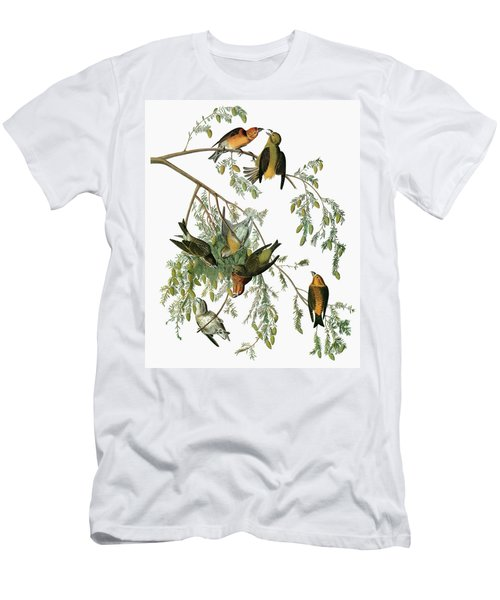 Audubon Crossbill Men's T-Shirt (Athletic Fit)