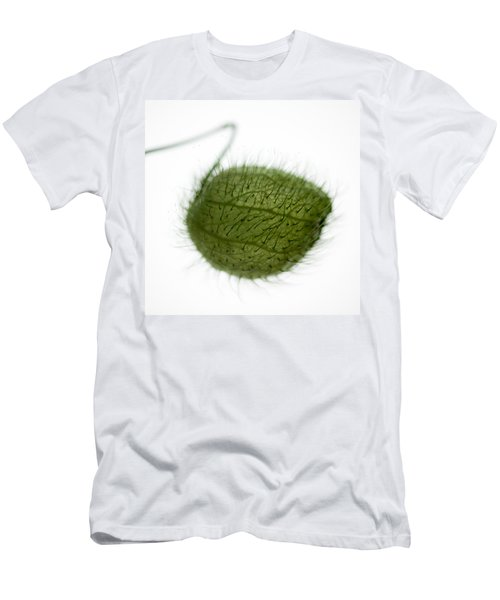 Balloon Plant Men's T-Shirt (Athletic Fit)