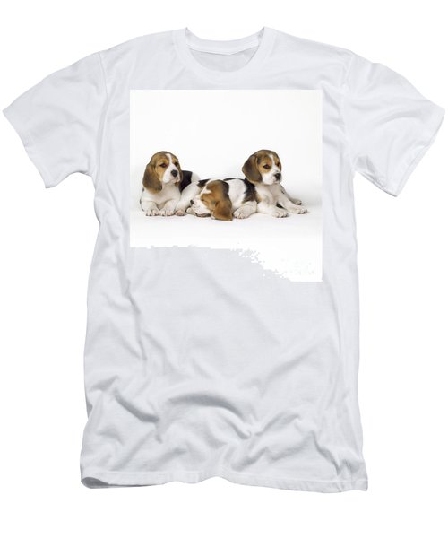 Beagle Puppies, Row Of Three, Second Men's T-Shirt (Athletic Fit)