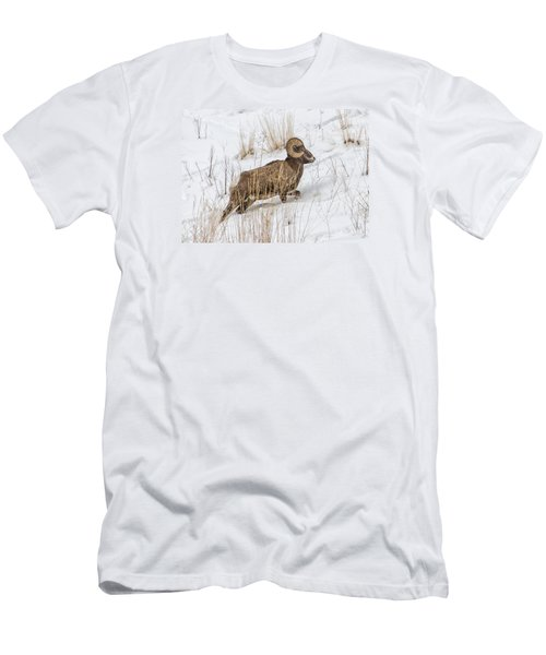 Bighorn In Yellowstone Men's T-Shirt (Athletic Fit)