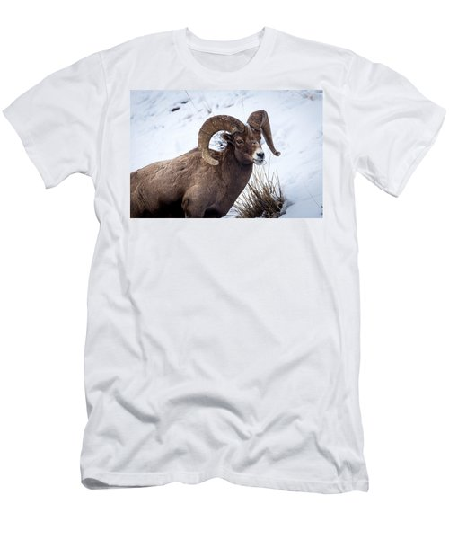 Bighorn Ram Men's T-Shirt (Athletic Fit)