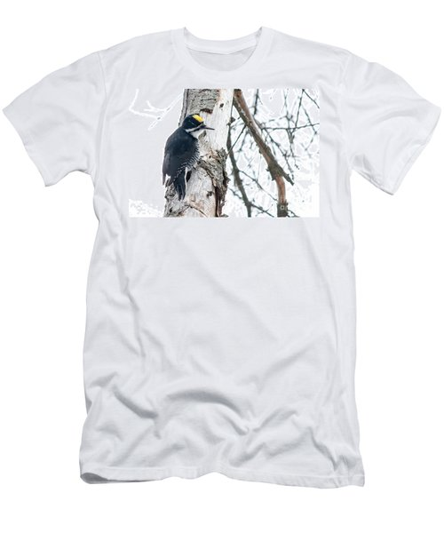 Black-backed Woodpecker Men's T-Shirt (Athletic Fit)