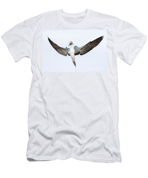 Blue-footed Booby Landing Galapagos Men's T-Shirt (Slim Fit) by Tui De Roy