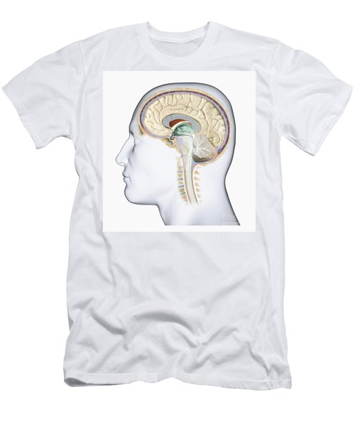 Brain In Cross Section Men's T-Shirt (Athletic Fit)