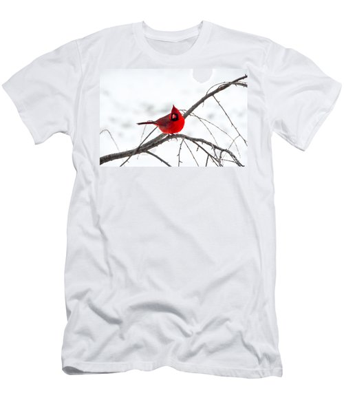 Cardinal On A Branch  Men's T-Shirt (Athletic Fit)