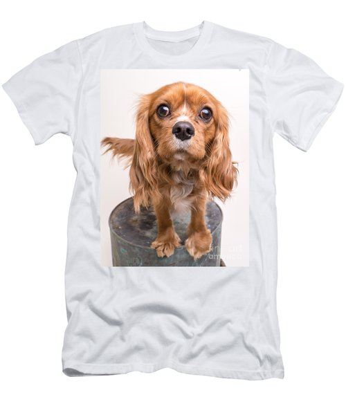 Cavalier King Charles Spaniel Puppy Men's T-Shirt (Athletic Fit)