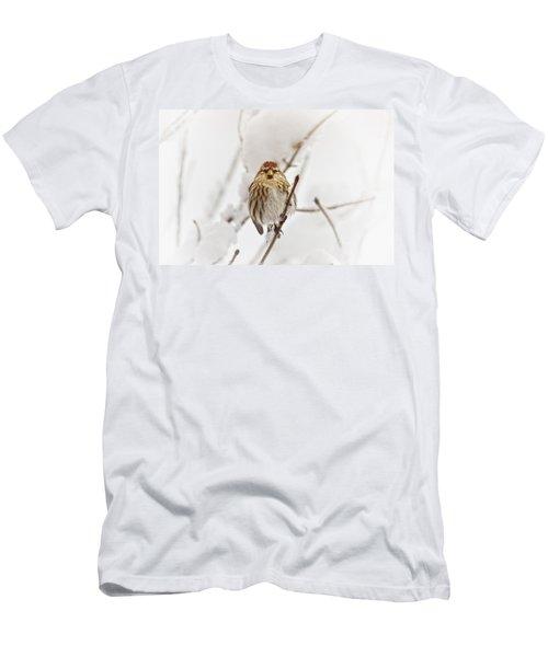 Common Redpoll Men's T-Shirt (Athletic Fit)