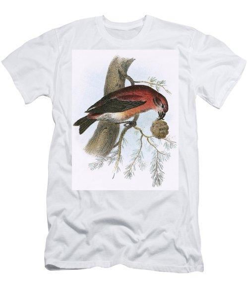 Crossbill Men's T-Shirt (Athletic Fit)
