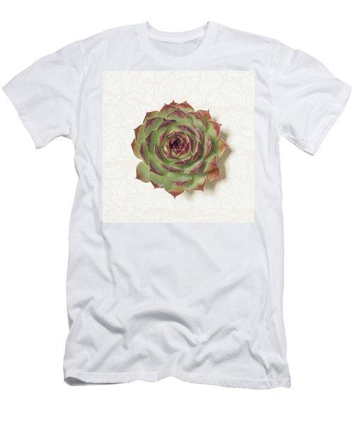 Echeveria Succulent Men's T-Shirt (Athletic Fit)