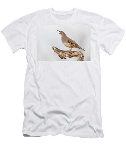Female Gambel's Quail Men's T-Shirt (Athletic Fit)