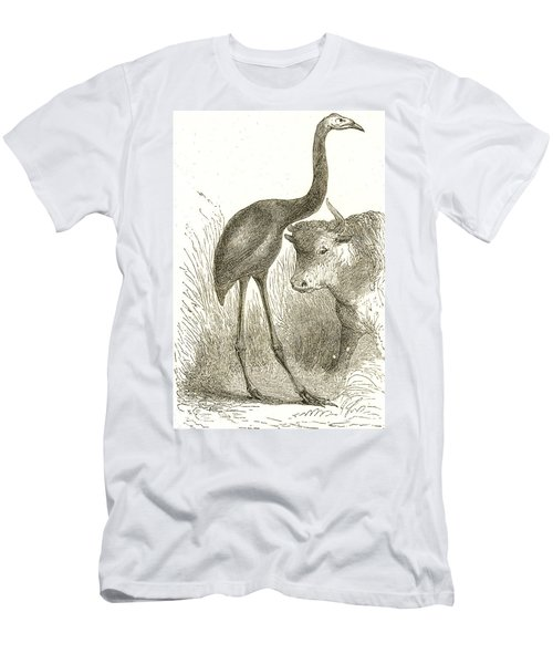 Giant Moa, Dinornis Men's T-Shirt (Athletic Fit)