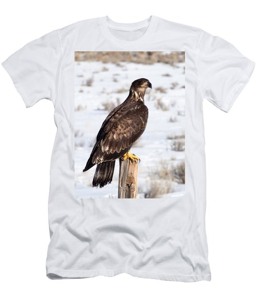 Golden Eagle On Fencepost Men's T-Shirt (Athletic Fit)