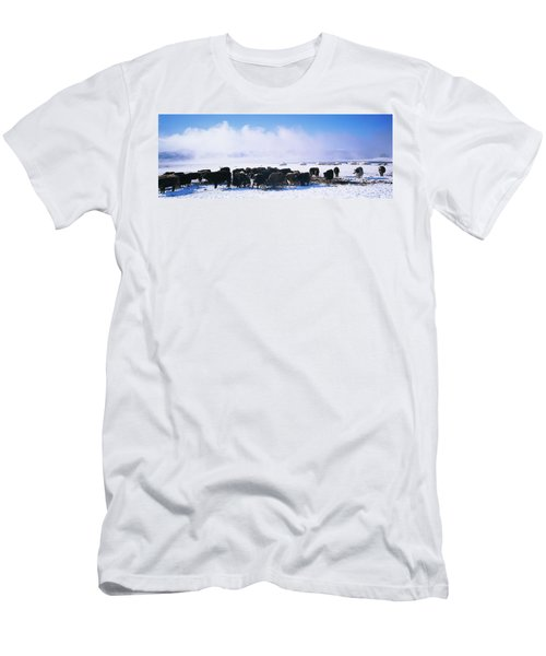 Herd Of Yaks On A Polar Landscape Men's T-Shirt (Athletic Fit)