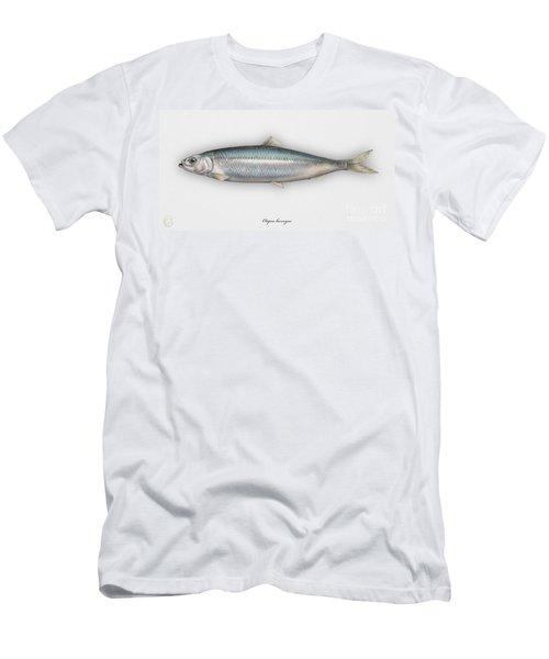Herring  Clupea Harengus - Hareng - Arenque - Silakka - Aringa - Seafood Art Men's T-Shirt (Athletic Fit)