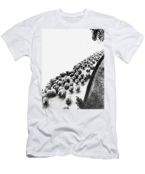 Hyde Park Sheep Flock Men's T-Shirt (Slim Fit) by Underwood Archives