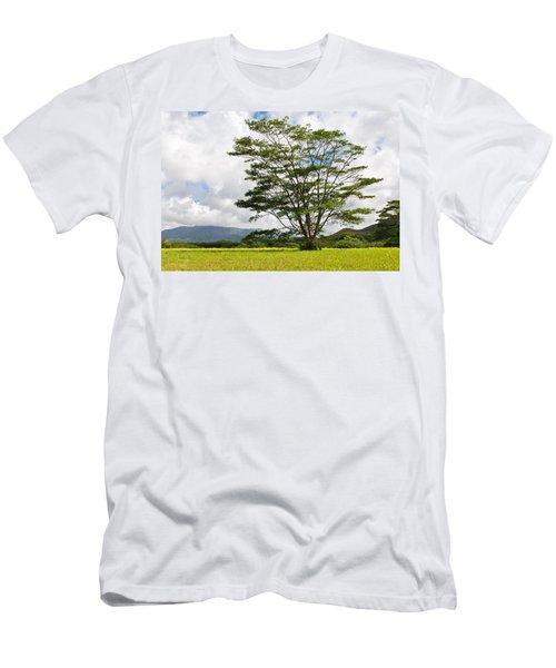 Kauai Umbrella Tree Men's T-Shirt (Athletic Fit)