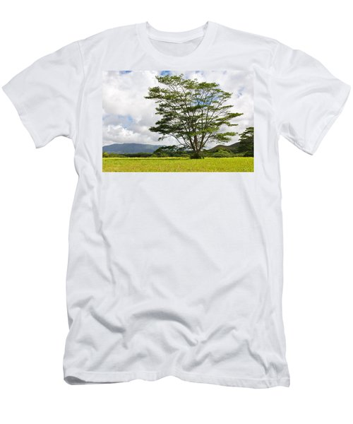 Kauai Umbrella Tree Men's T-Shirt (Athletic Fit)