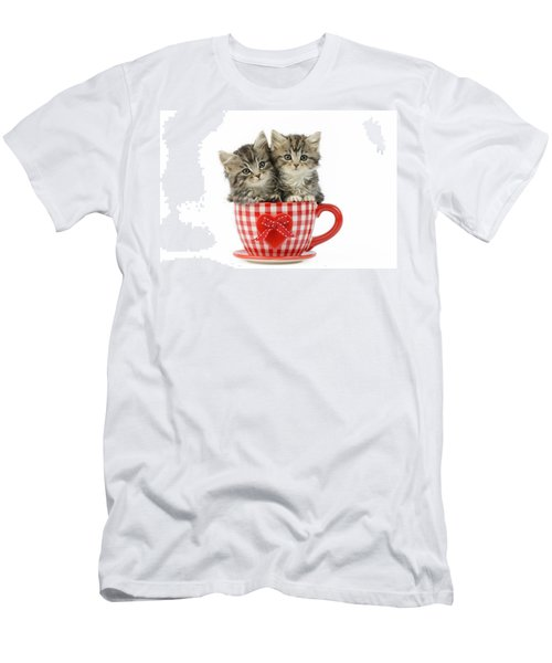 Kittens In A Gingham Cup Men's T-Shirt (Athletic Fit)