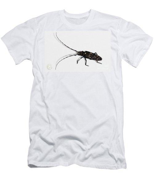 Long-hornded Wood Boring Beetle Monochamus Sartor - Coleoptere Monochame Tailleur - Men's T-Shirt (Athletic Fit)