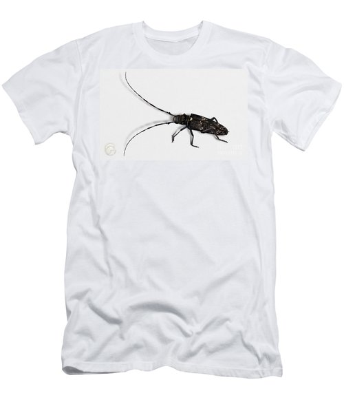 Long-hornded Wood Boring Beetle Monochamus Sartor - Coleoptere Monochame Tailleur - Men's T-Shirt (Athletic Fit)