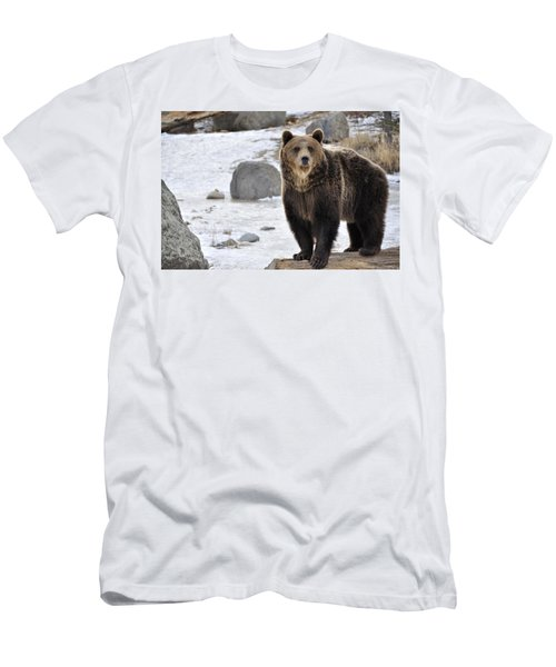 Montana Grizzly  Men's T-Shirt (Athletic Fit)