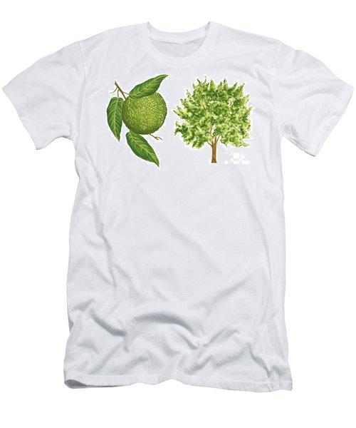 Osage Orange Tree Men's T-Shirt (Athletic Fit)