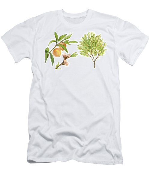 Peach Tree Men's T-Shirt (Athletic Fit)