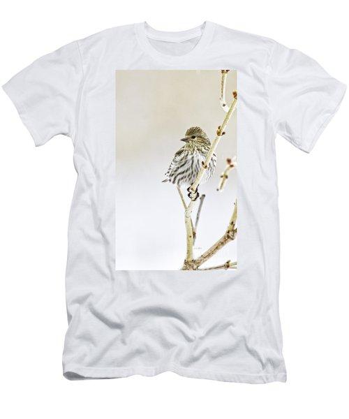 Pine Siskin Men's T-Shirt (Athletic Fit)