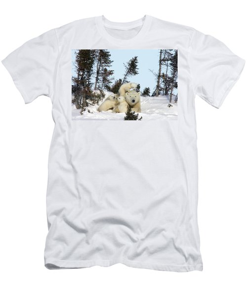 Polar Bear And Trio Of Cubs Men's T-Shirt (Athletic Fit)