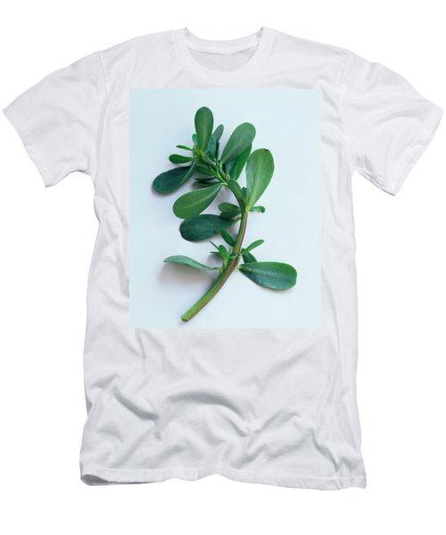 Purslane Men's T-Shirt (Athletic Fit)